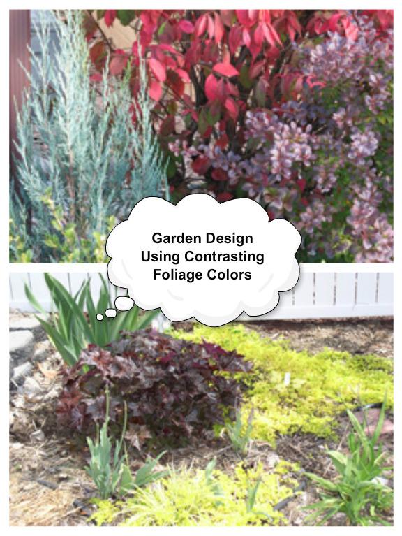 Garden Design Using Contrasting Foliage Colors