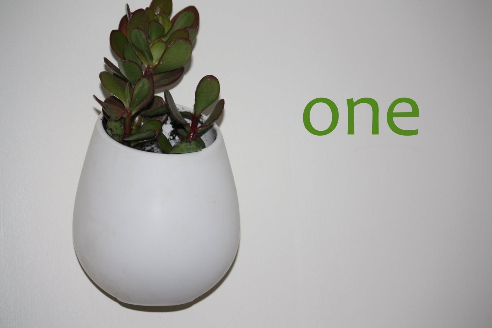 Succulent's white hanging pots