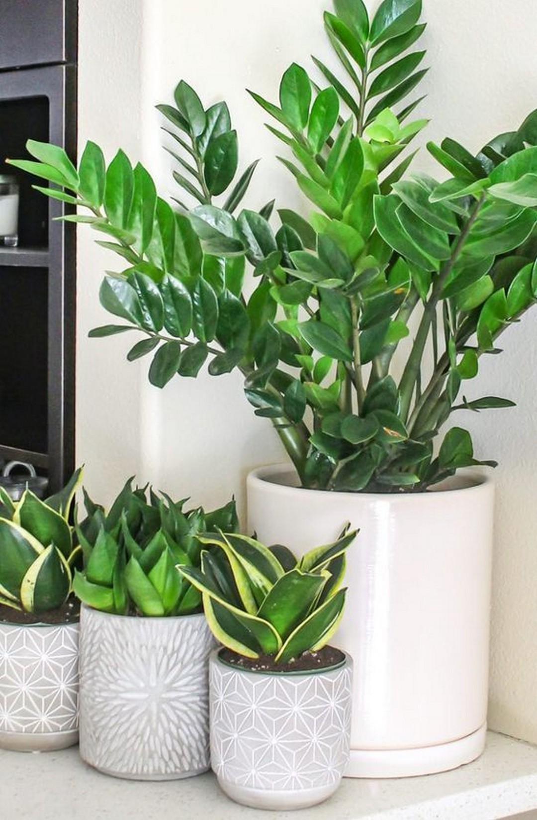 Indoor Plant Ideas That'll Instantly Breathe Life Into Your Home