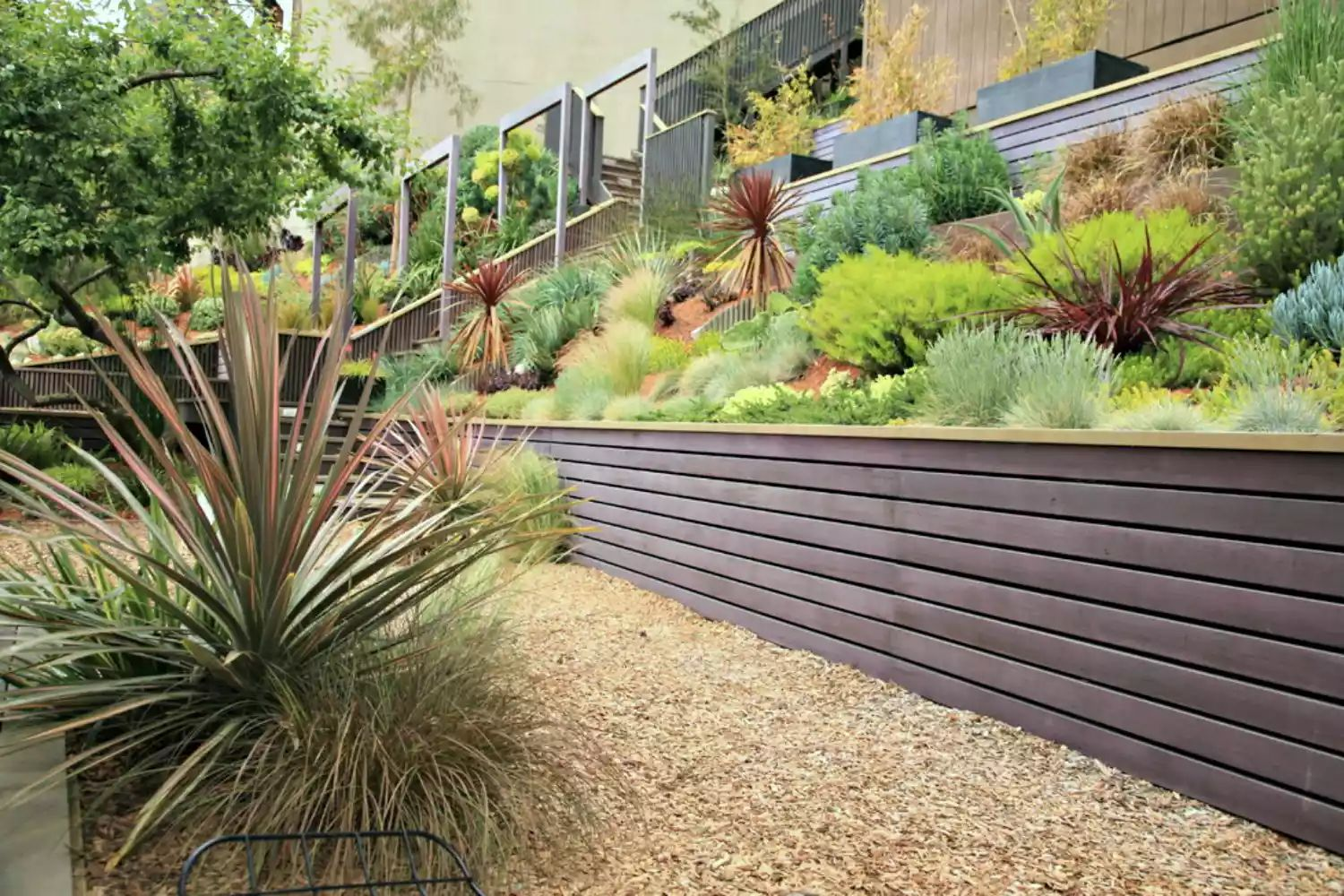 Eichler Remodel -   Beautiful Low Maintenance Front Yard Garden and Landscaping Ideas